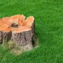 Reasons to Remove a Stump From Your Property