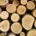 Tips for Buying Quality Firewood
