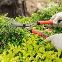 Tips for Trimming Overgrown Shrubs and Bushes