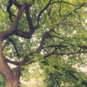 Can Trees Prune Themselves?