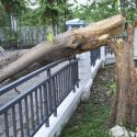How to Care For a Tree on Your Property After a Strong Storm