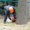 Here's When You Need Emergency Tree Removal Services