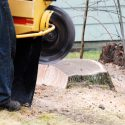 How Stump Grinding Services Benefit Homeowners