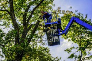 Tree Trimming vs Tree Pruning