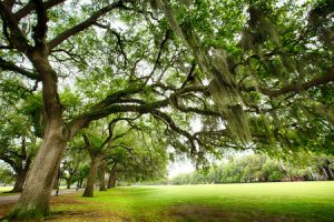 Tree Planting Services in Kingwood, TX