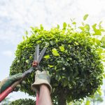 Tree Trimming Services in Atascocita, TX