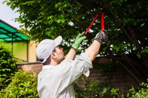 Tree Care Services in Kingwood, TX