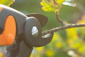 Tree Pruning & Care Services in Kingwood, TX
