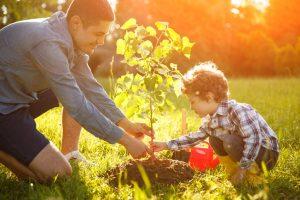 Tree Planting Services near Kingwood, TX