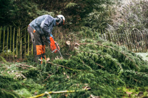 Tree Removal Services in Kingwood, TX