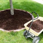 Tree Care Company in Kingwood, TX