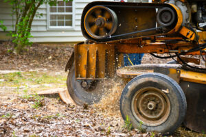 Stump Removal Services in Kingwood, TX
